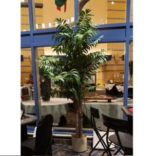 Palm Tree Rental